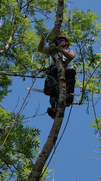 Baumfällen Baumschnitt Baumabtragung