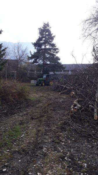 Baumfällen Baumschnitt